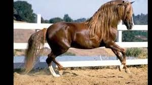 """Résultat de recherche d'images pour """"photos des plus beau chevaux au monde"""""""