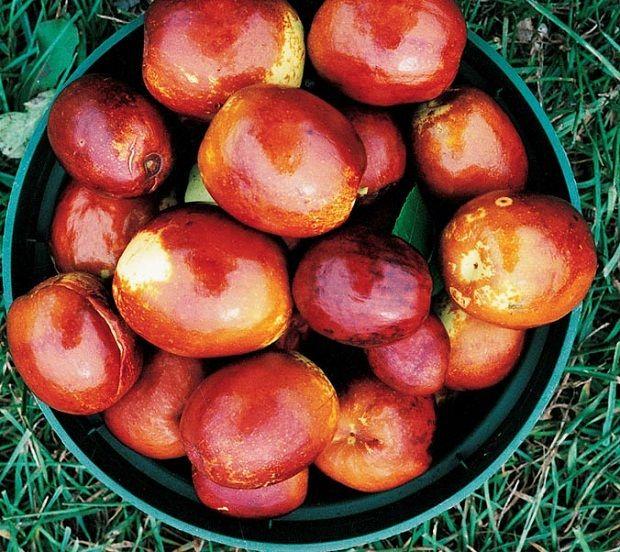 HünnapBu küçük kırmızı meyvenin çok güzel bir tadı vardır. Doğal bir antioksidan kaynağıdır. Uykusuzluk ve Anksiyeteyi Tedavi Eder Milyonlarca insan uykusuzluk ve anksiyeteden muzdariptir. Neredeyse insanların 1/3 ü hayatlarının belli bir döneminde uykusuzluk sorunu yaşamıştır. Hünnap bu konuda çok yardımcıdır. İçeriğinin yatıştırıcı etkisi vardır. İçeriği beyni etkilediği için doğal uykuya yardımcıdır.