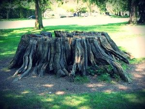 Best 25 tree removal cost ideas on pinterest stump grinding read our cost guide and learn how much it costs to remove a tree stump this includes the price of doing it yourself vs hiring a stump removal service solutioingenieria Image collections