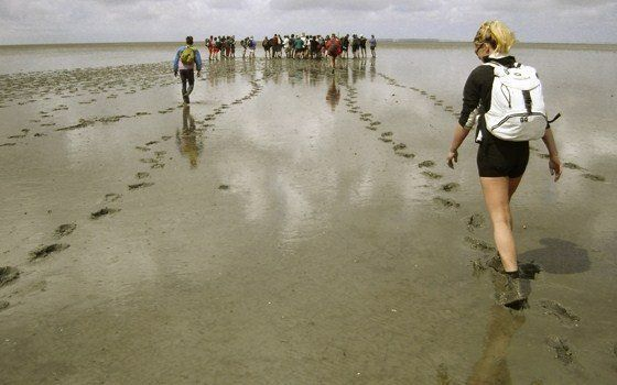 Mud walking (in Dutch: wadlopen) is an exciting and adventurous way of acquainting oneself with a unique nature reserve, the Wadden Sea, also the largest continuous national park in Europe.