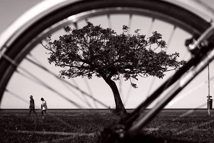 Albero a raggi © Giuseppe Madonia