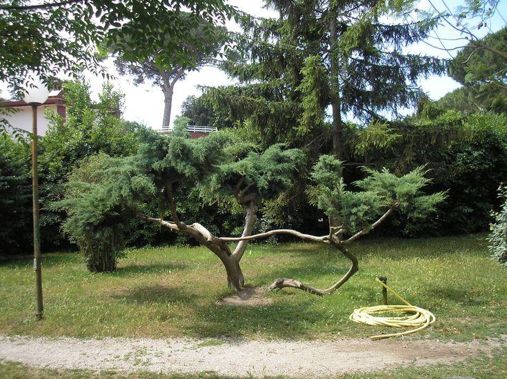 Pozzuoli,+városi+park,+2015.+június
