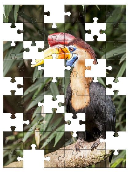 Free Jigsaw Puzzle Online - TROPICAL BIRD  #Game #JigsawPuzzle #Puzzle #jigsaw