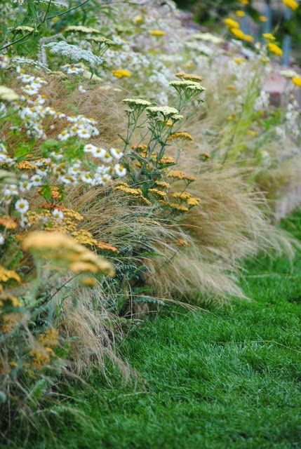 Maruna tansy, yarrow Stipa thin and cv. 'Terracotta' English Gardens, Hampton…