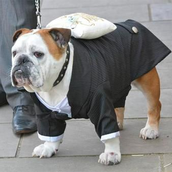 Large Dog Tuxedo , as seen on The Alan Titchmarsh Show. Buy your Large Dog