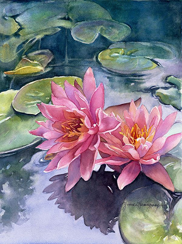 Lotus Reflections Fine Art Reproduction By Yvonne Hemingway Fine