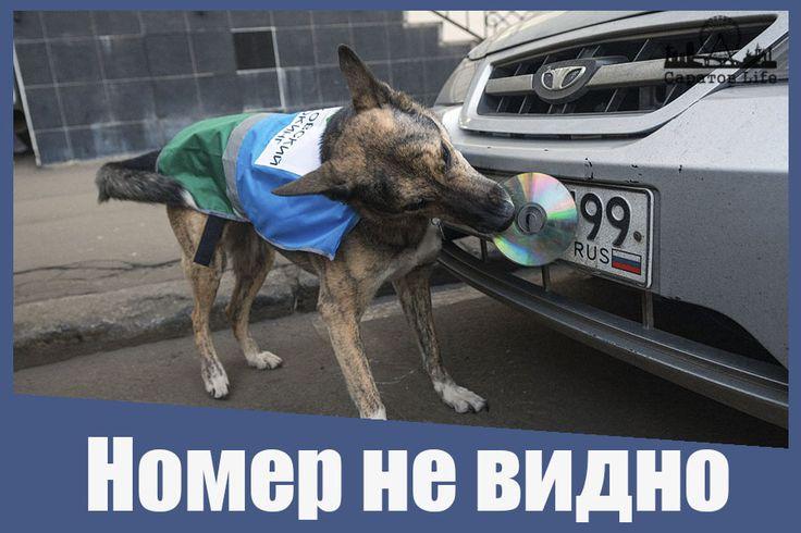 В Госдуме не поддержали введение штрафов за нечитаемые номера машин на парковках Подробнее http://www.nversia.ru/news/view/id/102031 #Саратов #СаратовLife