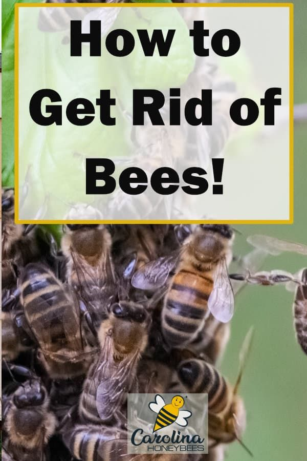How To Get Rid Of Honey Bees In A House
