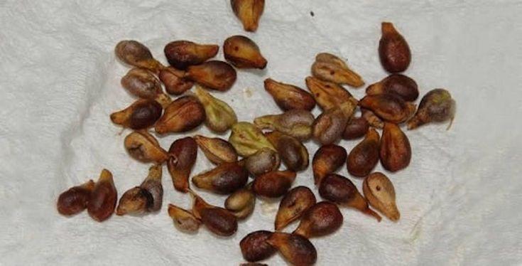 Sebbene molte persone li scartino per il loro tipico sapore amaro, isemi d'uvasono ricchissimi di benefici e proprietà terapeutiche che sarebbe bene non ignorare o scartare. Oltre ad essere antiossidanti, ci aiutano ad apparire più giovani, a perdere peso e a prevenire una lunga serie di condizioni. Di seguito ti elenchiamo8 motivi per mangiare i semi d'uva. Antiossidanti. I semi d'uva sono ricchi difenolicii quali, assieme altocoferoloe alleproantocianidine, hanno una grande azione…