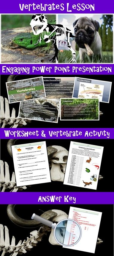 best 25  vertebrates ideas on pinterest