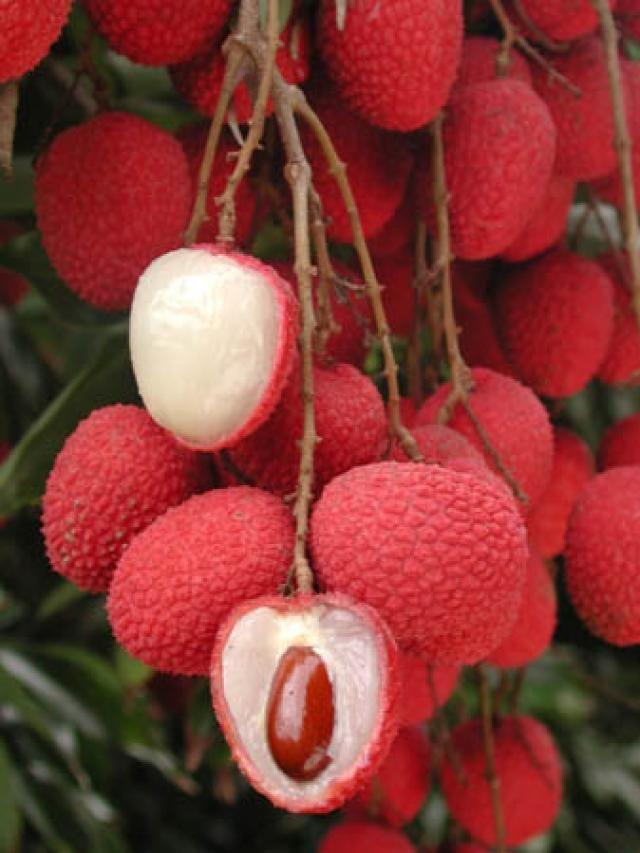 Lychee  El árbol es de hoja perenne y de tamaño medio, alcanzando 15-20 m de altura. La fruta es una drupa que tiene 3-4 centímetros de longitud y unos 3 cm de diámetro. La parte exterior (epicarpio) es de color rojo y fácil de retirar. El mesocarpio (interior) está formado por capas de pulpa blancas, dulces y translúcidas, ricas en vitamina C con una textura similar a la de la uva. En el centro se encuentra la semilla rodeada por un duro endocarpio.