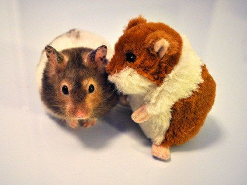 """Psst! I'll let you in on a little secret…""  60 Real Animals Snuggling With Stuffed Animals • Page 4 of 5 • BoredBug"