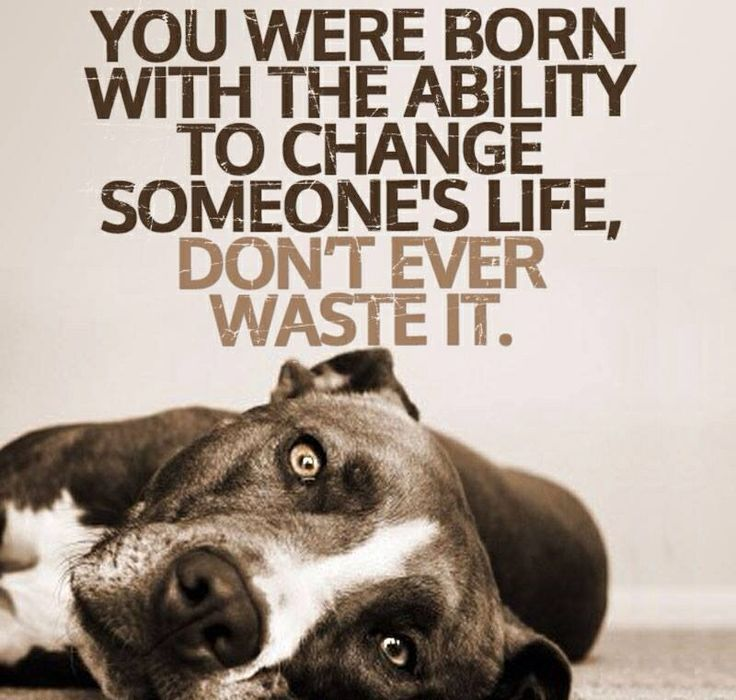 Rescue Dog Sayings – Daily Motivational Quotes