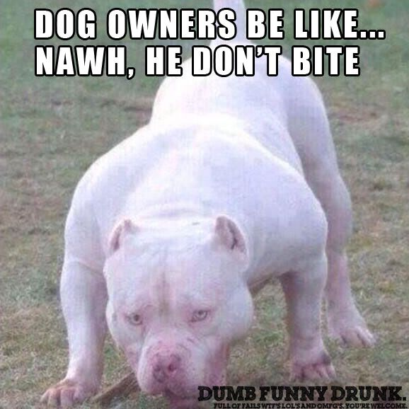 dog owner be like funny lol funny pictures and memes