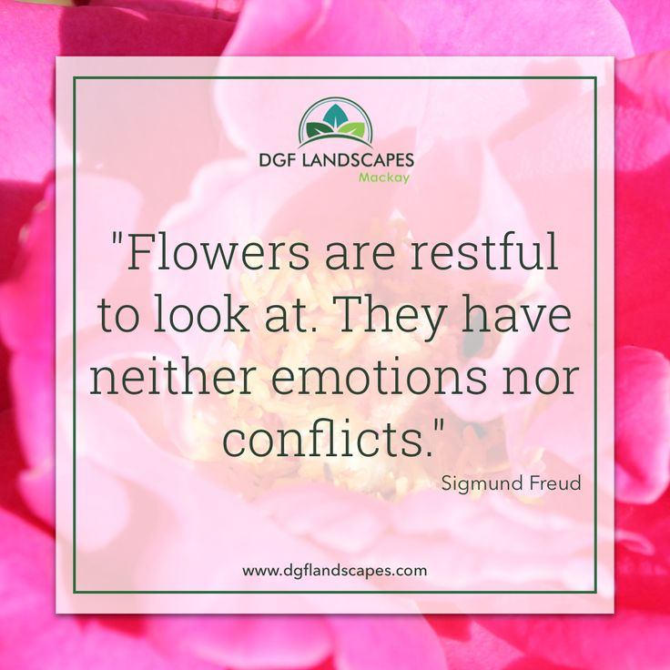 """""""Flowers are restful to look at. They have neither emotions nor conflicts."""" - Sigmund Freud 🌼🌸🌺 #TuesdayTruth"""