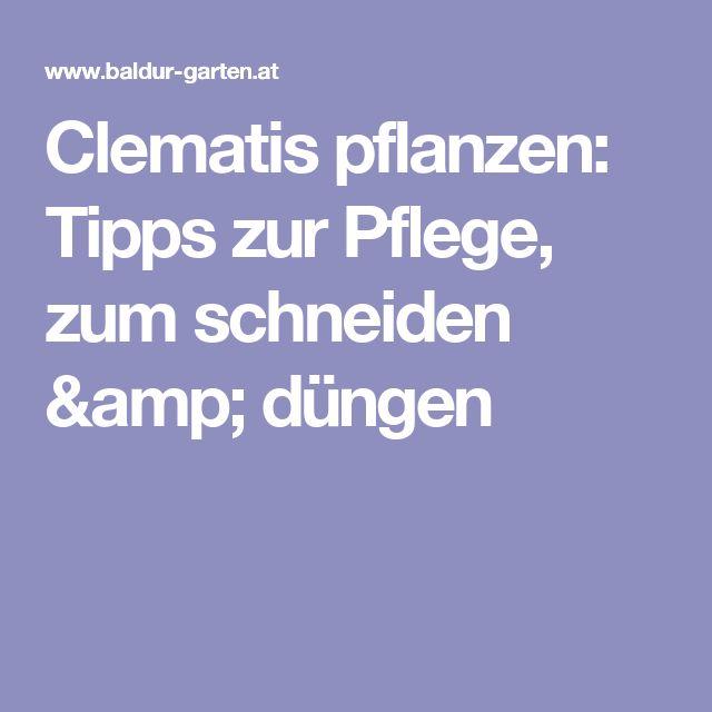 17 Best Ideas About Clematis Schneiden On Pinterest | Waldrebe ... Clematis Kletterpflanze Tipps Pflegen