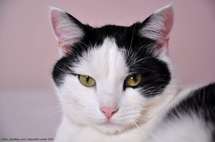 Was 30 Katzen mit Nestlés PR zu tun hat...