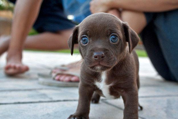 Filhotes de Cachorro Mais Adorável do Mundo