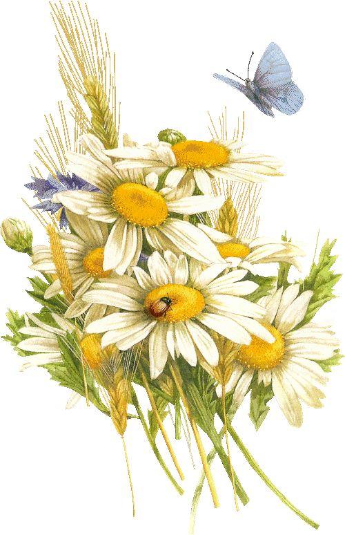 Нарисованные картинки ромашки (32 фото) ⭐ Наслаждайтесь ...
