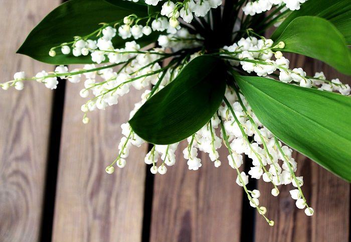Kuvatarina: Kun kielot kukkivat