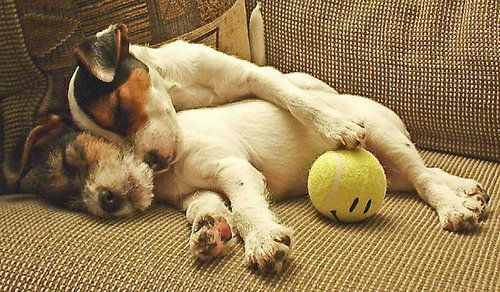 ...Ball, Puppies, Dogs, Best Friends, Cuddling, Jack Russell Terriers, The Games, Sweets Peas, Animal