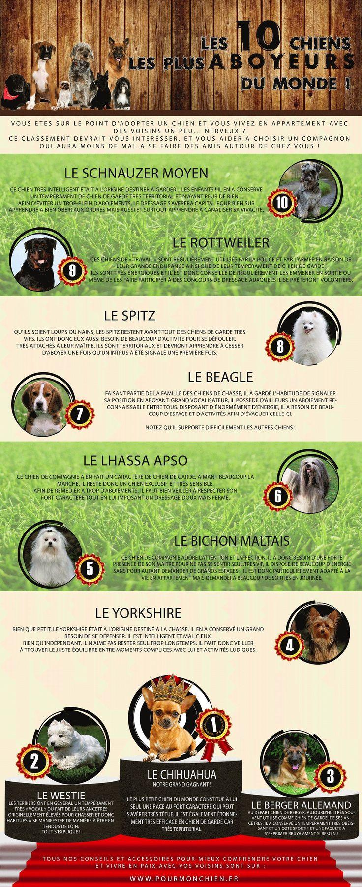 #Infographie sur les 10 races de chien qui aboient le plus. #chien #dog #aboiement