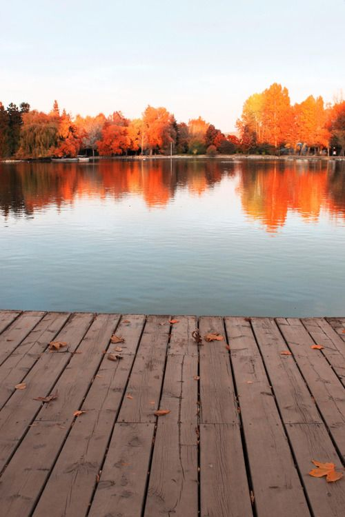 Die letzten Sonnenstrahlen und farbenfrohe Blätter genießen – wo würde es besser gehen? #herbst #entspannung