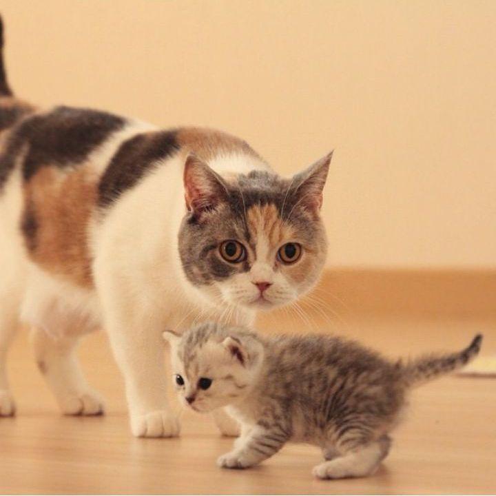 😍😍😍  From @lookaewcat  Follow @my.adorable.cats for awesome cats  💛  💛  💛  💛  💛  #kids #instakids #ig_kids #cute #children #instagram_kids #toddler #niños #nephew #parents #toddlers #playing #parenting #cool #sweet #friends #toys #play #child #family #school #funny #adorable #çoktatlı #çocuk #bebek #yavru #ig_çocuk #oyun #çocuklar 💛
