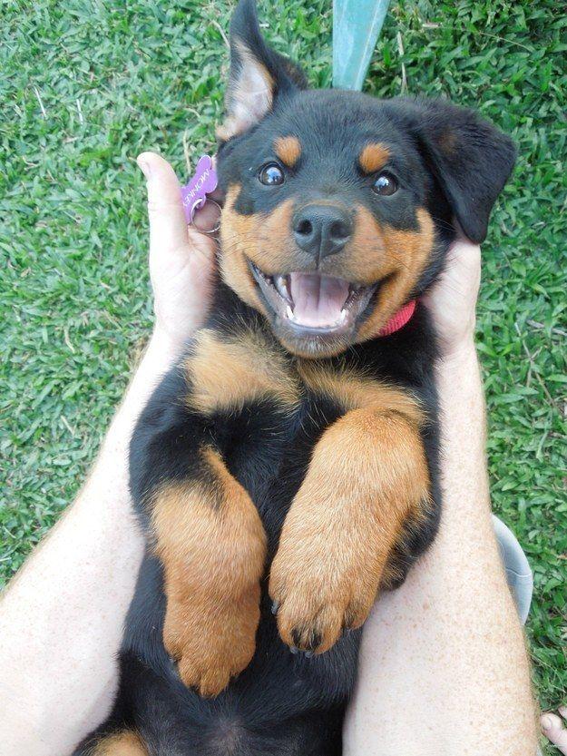 Então, agora, olhe para este filhote, copie seu pequeno sorriso feliz…   Tente passar por esta postagem sem sorrir
