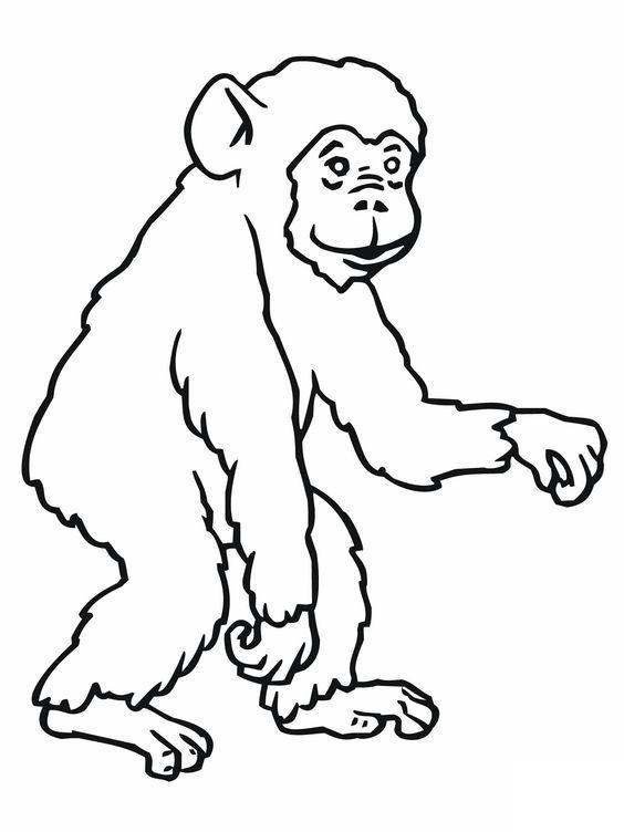 11 best Monkeys images on Pinterest | Monos, Colorear y Páginas para ...