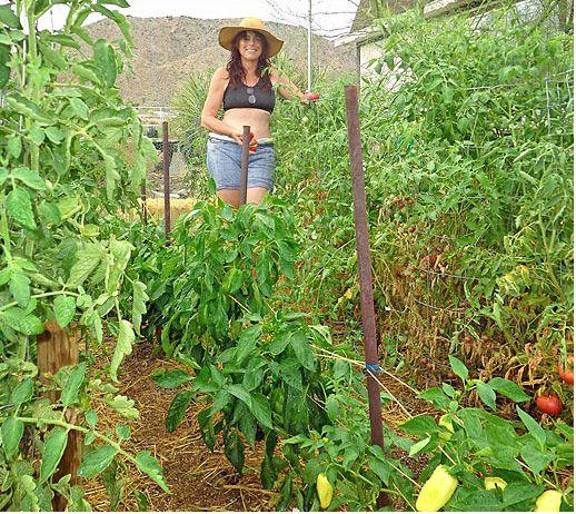 Successful gardening in the high desert takes effort but is rewarding.