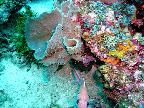 Caribbean Sea Creatures: Island Of Spice Images On Pinterest