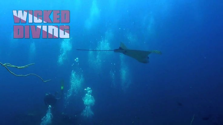 Dive Komodo National Park with Eagle Rays