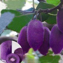 Nuevas variedades corazón púrpura Kiwi Kiwi Kiwi fruta del árbol Bonsai semillas para el hogar y jardín(China (Mainland))