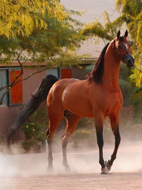 Arabian, beautiful bay