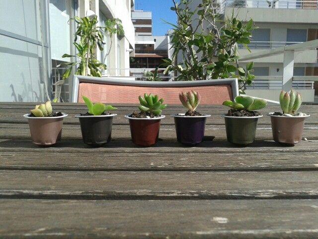 #succulove Nespresso capsules reused to plant succulents. DIY! It's so easy