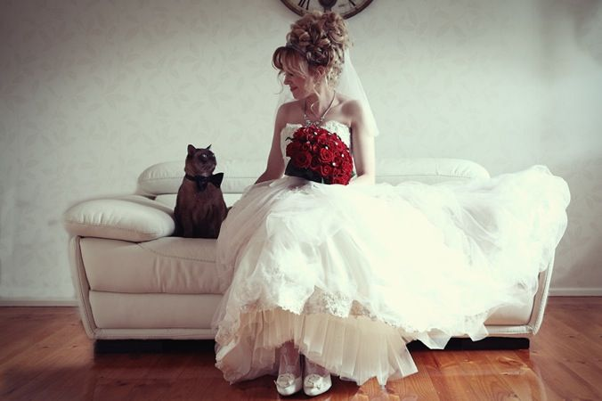 such a cute image ~you've got to love a cat in a bow tie!: Cats, Idea, Bowtie, Bow Ties, Weddings, Pets, Wedding Photo, Wedding Dress, Bride