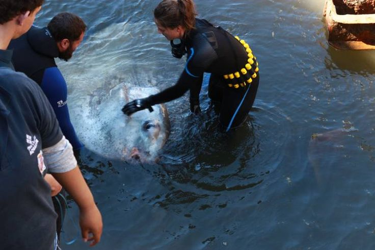 Why we need aquariums – Blog – Two Oceans Aquarium Cape Town, South Africa   Exhibits   Conservation   Education   Events   Diving