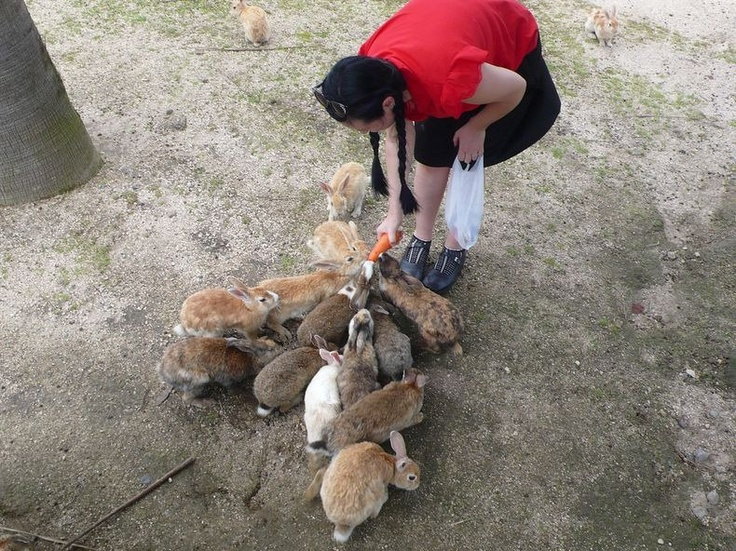 Okunoshima, Japan. Today the 700-square-meter island is home to more than 300 rabbits that roam freely, earning the nickname of Usagi Shima, or Rabbit Island.