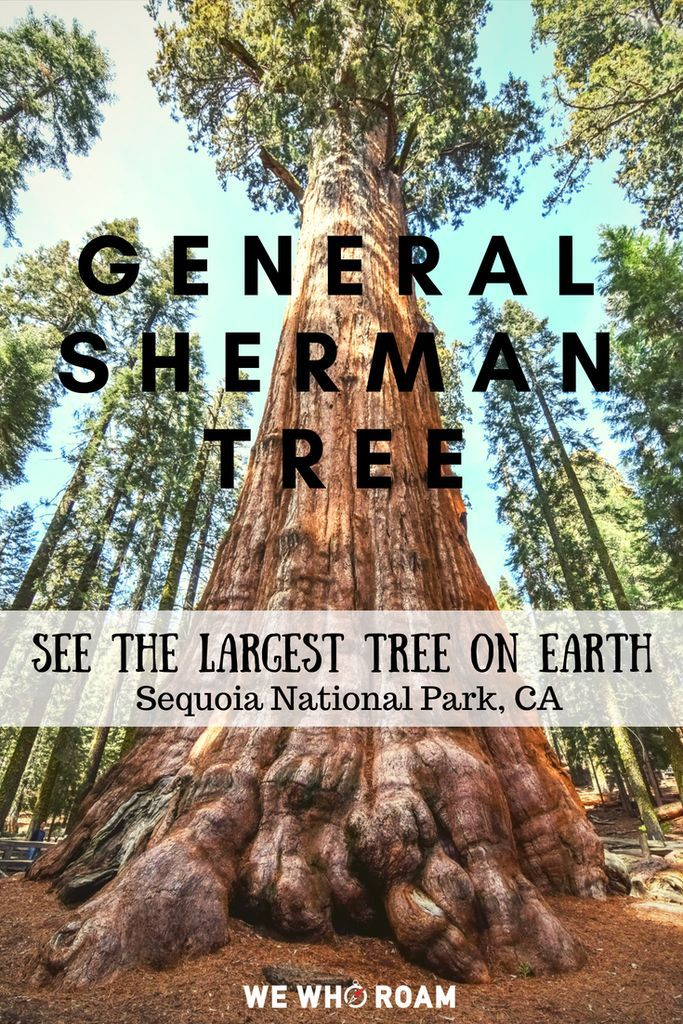 General Sherman Tree See The Largest Tree On Earth At Sequoia Nat
