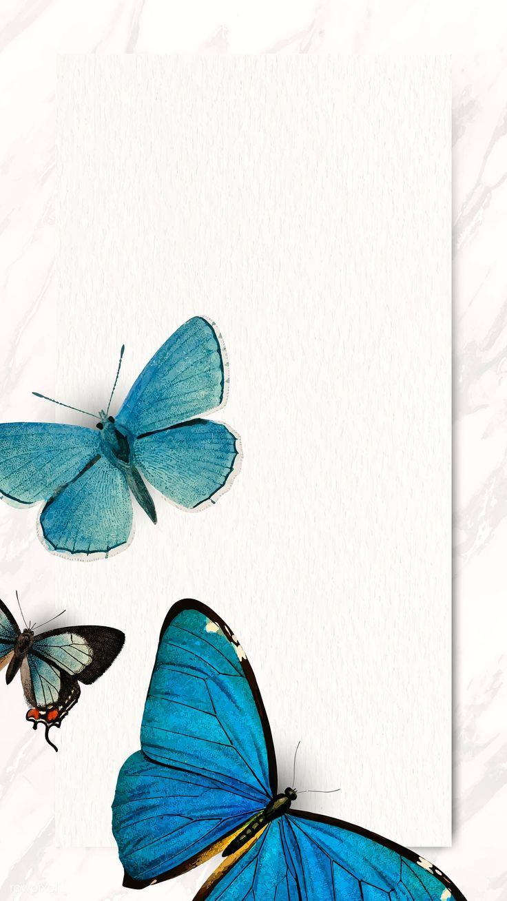 Download premium illustration of Blue butterflies