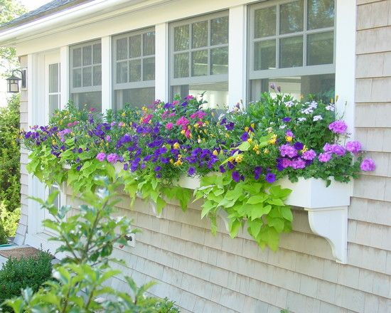 Bay Window Garden Ideas pictures of window boxes copper window box on bay windows Traditional Box Bay Window Design Pictures Remodel Decor And Ideas Page 15
