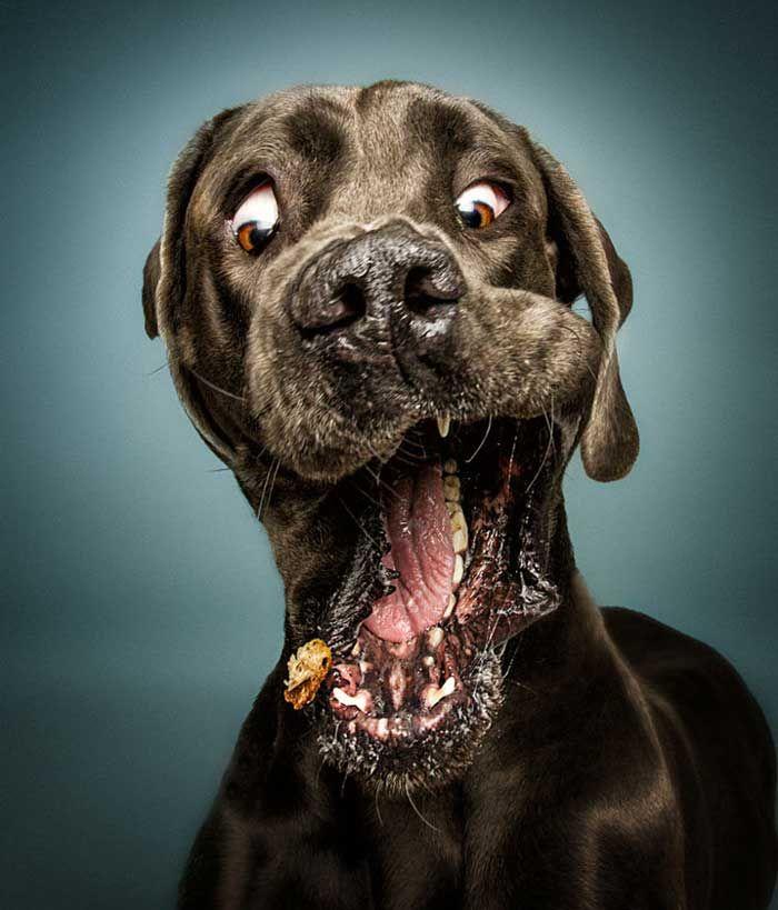 Alman fotoğrafçı Christian Vieler, köpekler mamaları havada yakalamaya çalışırken deklanşöre basarak anı yakalamış… Detaylar ajanimo.com'da.. #ajanimo #ajanbrian #hayvan #animal #dog
