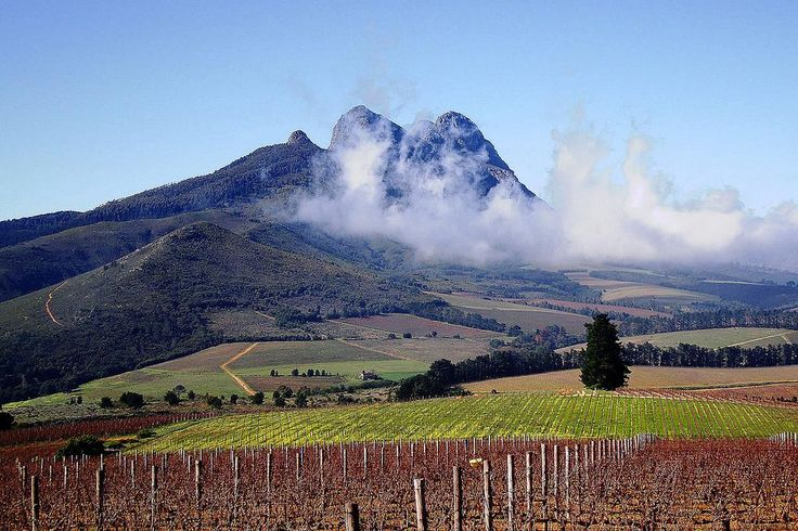 We're surrounded by the best wines & scenery you will come across anywhere in the world!#Stellenbosch @StellWineRoute pic.twitter.com/s2kM7aateU
