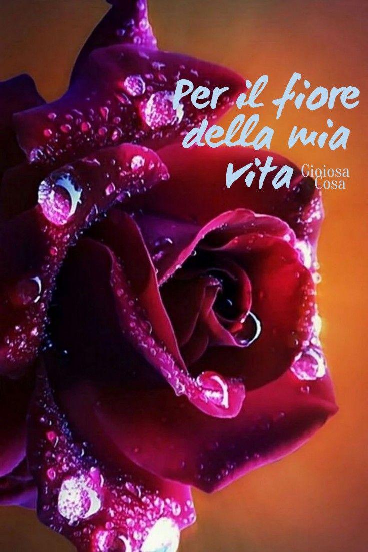 Fiori X Te.Pin Di Mario Sicuro Su Rose Belle Nel 2020 Immagini Di Fiori