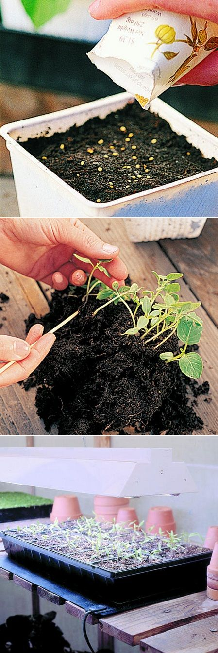 How to : Step 1 : Fill 4-inch pots to just below the rim with a light, porous seed-starting or potting mix. Moisten the mix, and let it drain. Step 2 : Scatter seeds thinly over the surface. and cover the seeds with the proper amount of mix. Step 3 : When the seeds germinate,