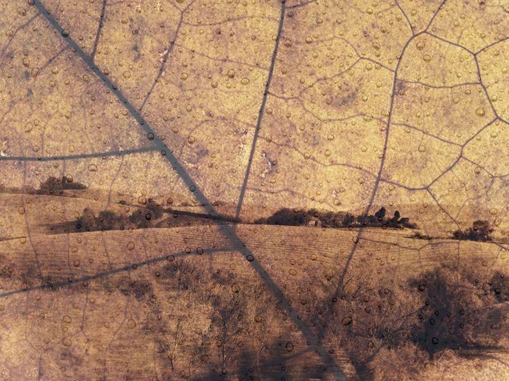 Antique Landscape by Eleonora Gadducci