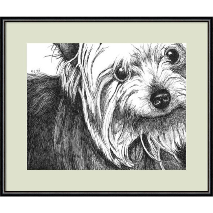 Framed Art Print 'Bella the Yorkie Dog' by Beth Thomas 13 x 11-inch
