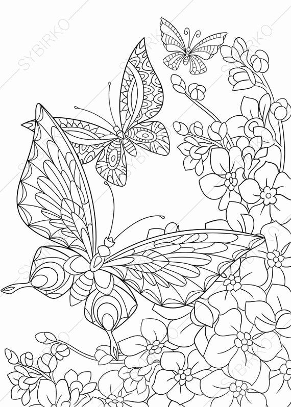 Coloring Page Of A Butterfly Inspirational Butterfly And Spring Flowers 3 Coloring Pages An In 2020 Butterfly Coloring Page Animal Coloring Pages Flower Coloring Pages