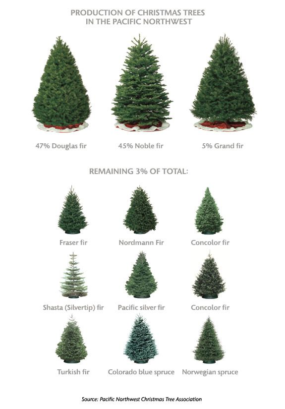 northwest christmas tree types - Type Of Christmas Trees